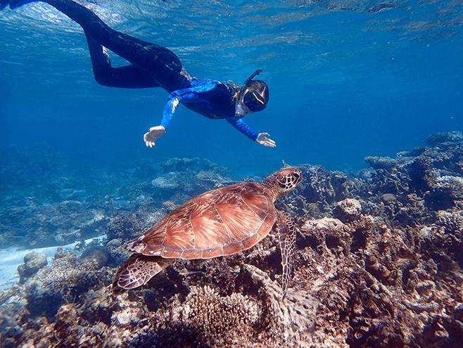 Dive/Snorkel in Great Barrier Reef or the Ningaloo Reef